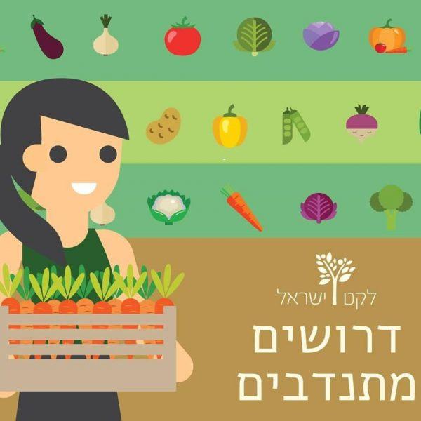 התנדבות בלקט ישראל